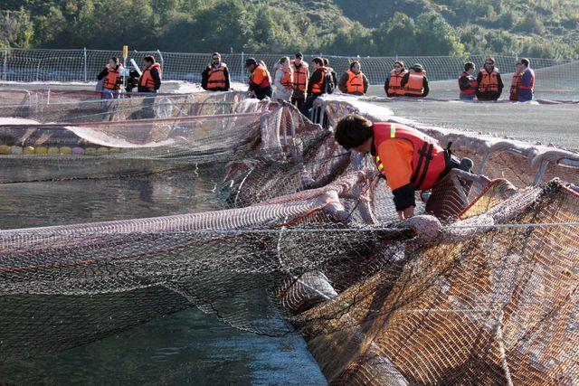 Jaulas de cobre para cultivo de peces una gran noticia for Cuidado de peces