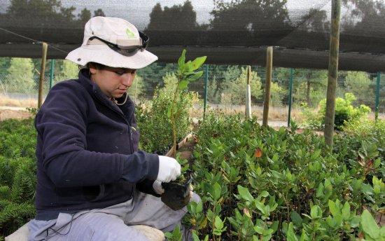 Vivero de el teniente pinta de verde el entorno for Viveros en rancagua
